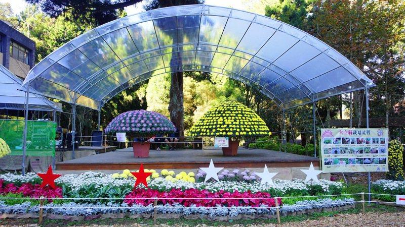 來不及到台北觀看士林官邸菊展的中南部民眾,今年12月14日起菊展再次移師到風景秀麗的溪頭展覽到明年元旦。圖/本報系資料照片
