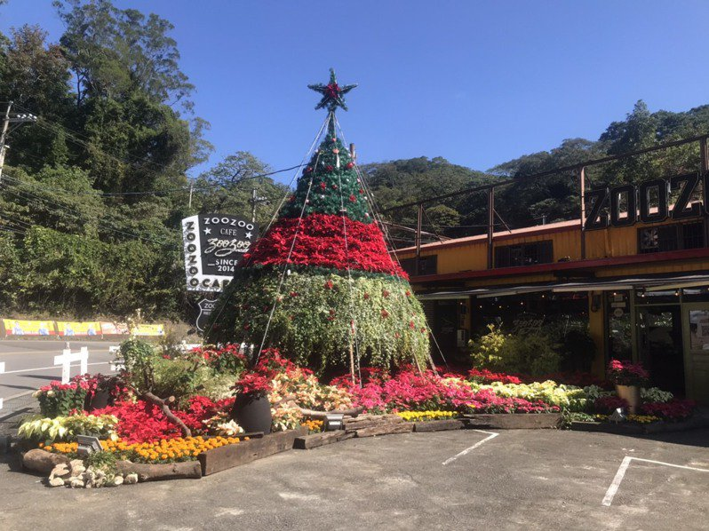 桃園市復興暨大溪區台七桃花源休閒農業區是北台灣重要花卉產地,近3年都選在聖誕節期間打造最高海拔的聖誕紅樹創造話題,今年也已在zoo zoo咖啡館廣場打造一座高9公尺「聖誕紅樹」,入夜點燈更為繽紛亮眼。圖/桃園市農業局提供