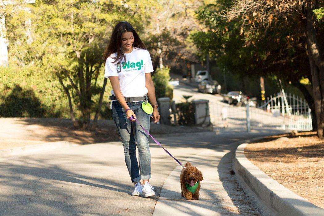 據悉軟銀願景基金同意,將持有的遛狗新創企業Wag Labs近五成股權出售給原公司...
