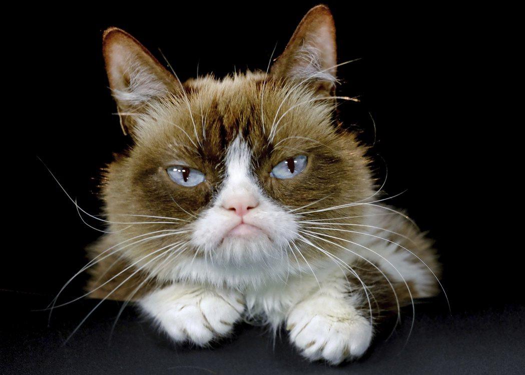 網紅臭臉貓因先天軟骨發育不全,導致咬合不正,讓牠看起來永遠擺著臭臉。 (美聯社)