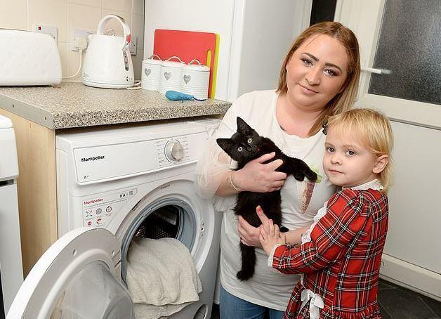 飼主CPR搶救受困洗衣機的愛貓。圖擷自<a href=