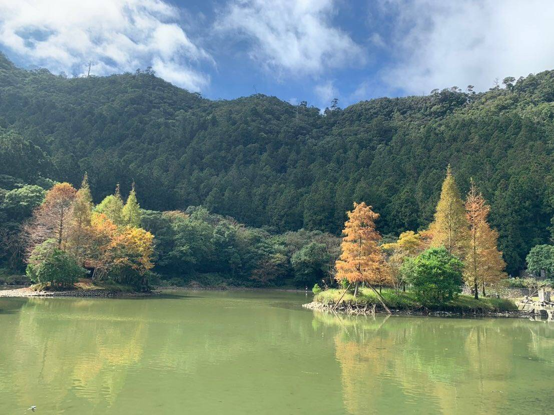 最近落羽松漸漸轉紅,季節限定的美景可持續到年底。 圖/力麗集團提供