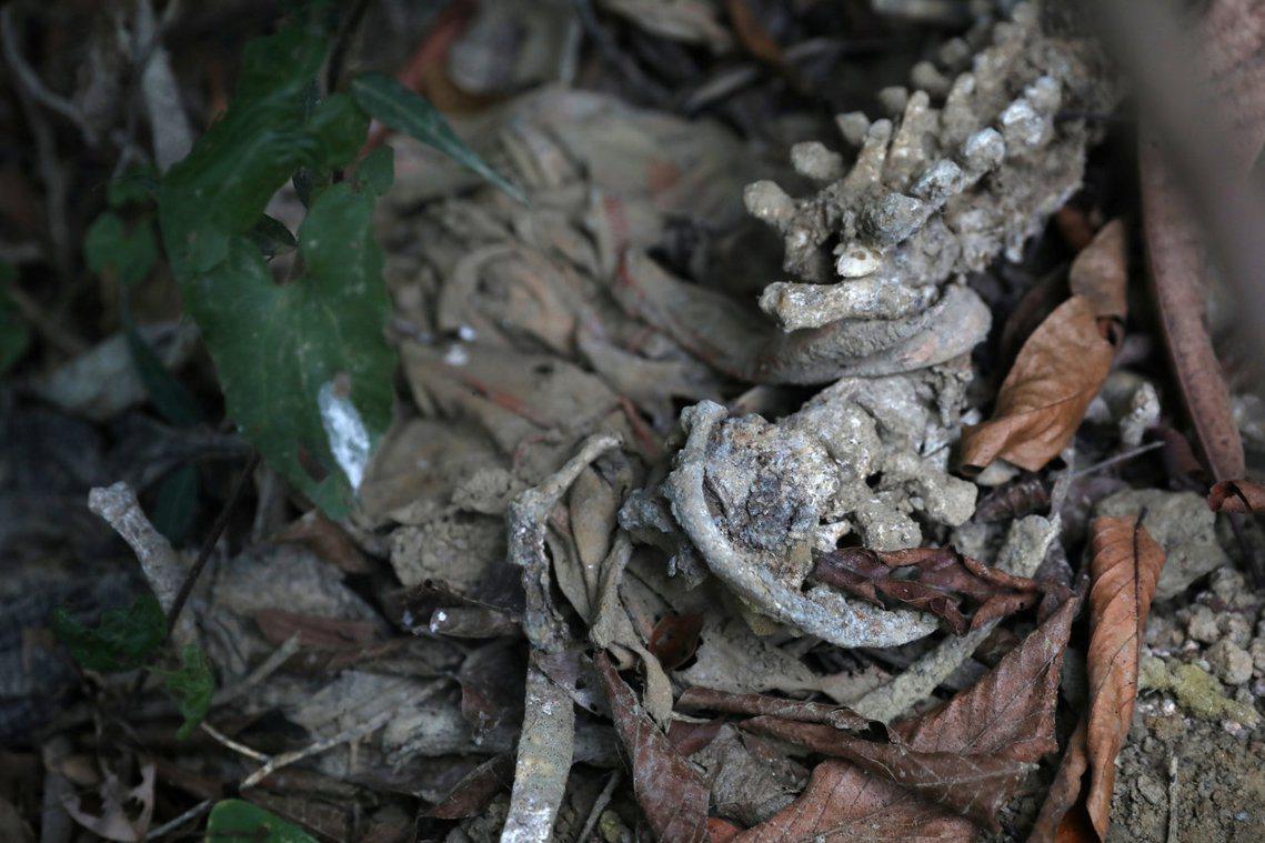 圖中的白骨,就是由《路透社》記者揭發的若開邦印丁村處決事件,慘遭屠殺的羅興亞村民...