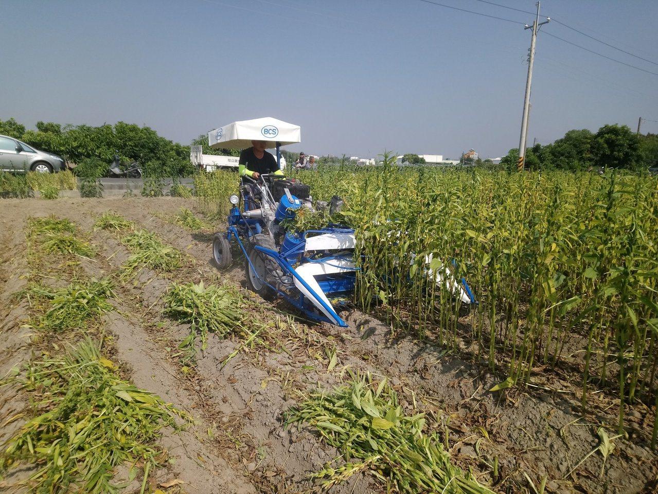 台南區農改場引進乘坐式割捆機並改良後,估計可以機械割捆取代24個採收人力。圖/台...