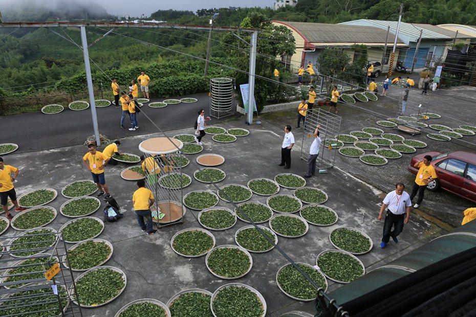 「台式烏龍茶」、「台式烏龍茶加工技術規範」等兩岸產業共通標準將發布。本報資料照片