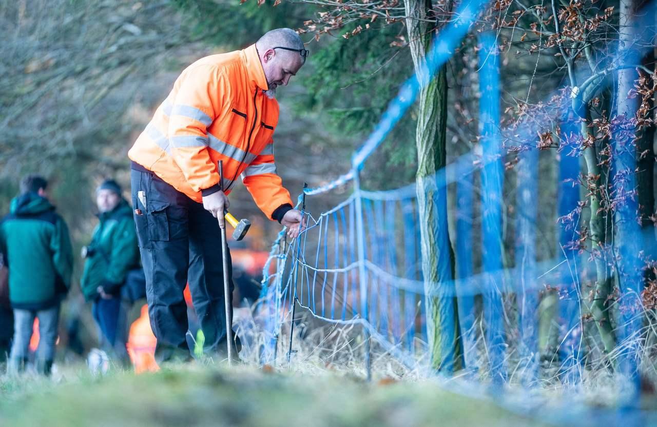 德國檢疫人員在鄰近波蘭邊界的包岑市附近設置電圍籬,防止野豬把非洲豬瘟病毒帶進德國...