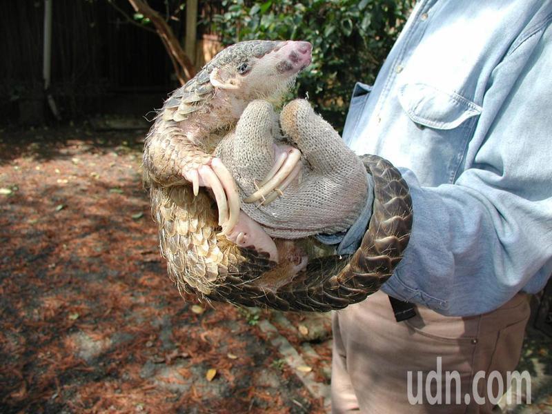 1997年12月11日在台灣動物區誕生的「穿胖」。記者魏莨伊/攝影