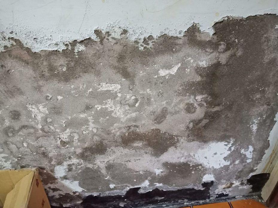 原PO說自己租屋處的客廳壁癌是圖片的6倍之多。圖擷自臉書社團「爆系知識家」