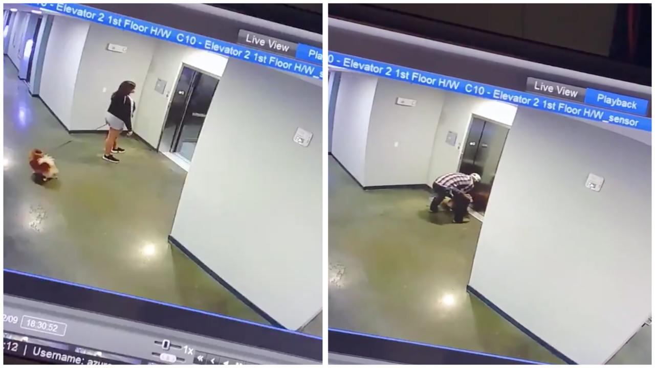 從監視器畫面清楚可見,一名女子牽著狗狗正在等待電梯,但狗狗卻沒來得及跟上主人,電...