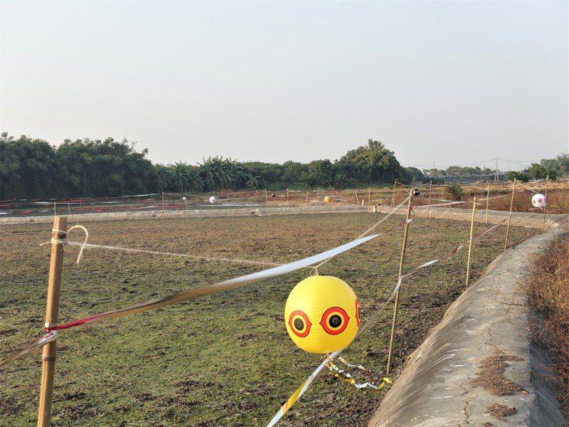 台南市政府農業局與水雉生態教育園區推廣友善耕作,圖為友善驅鳥裝置。圖/台南市政府農業局提供