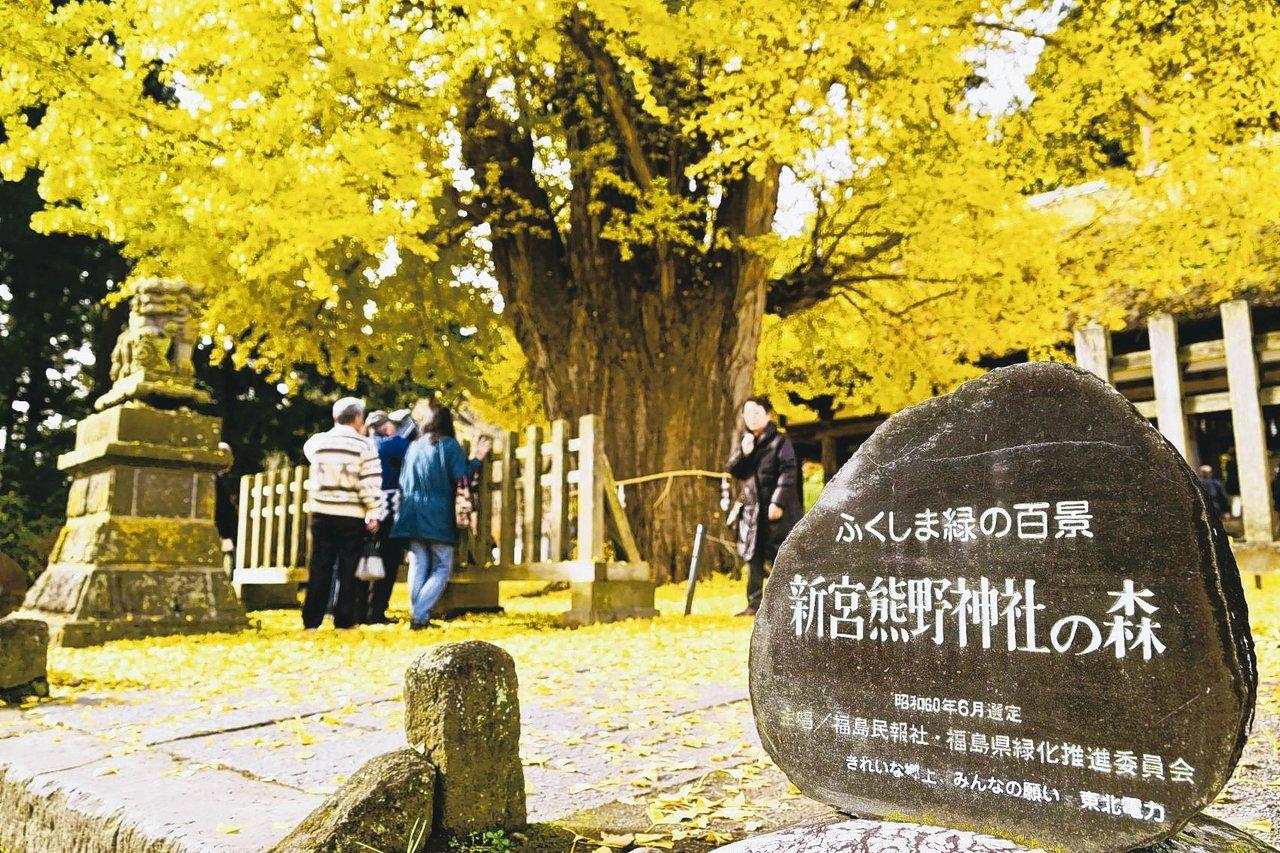 每到深秋,800歲銀杏綻放的秋顏,是新宮熊野神社最值得一賞的美景。 圖/陳志光、...