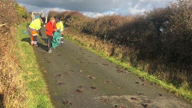當局早前已派員到現場撿走鳥屍進行化驗。(Dafydd Edwards)