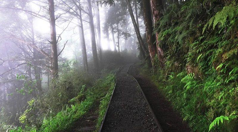 在宜蘭太平山自然步道中欣賞山林雲霧,享受森林浴洗禮,讓人心曠神怡。 圖/KLOO...