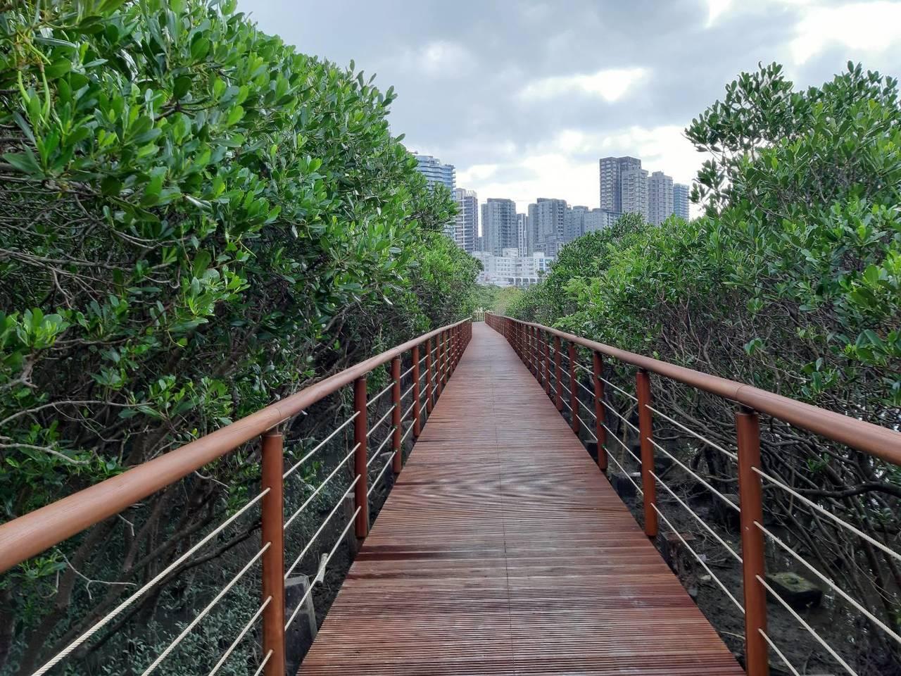 紅樹林木棧步道今年初因河口潮汐沖刷,嚴重損毀與歪斜,羅東林區管理處整修後,今天宣...