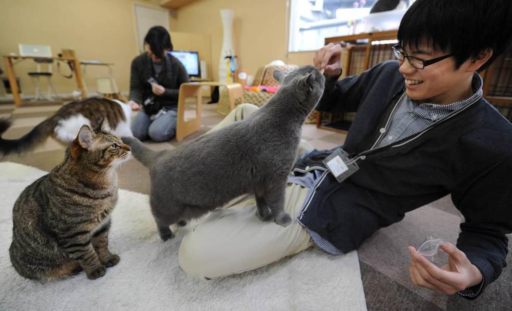 在日本東京、岐阜和大阪經營貓咪中途咖啡廳的公司「貓咪共和國」16日將在大阪開設「...