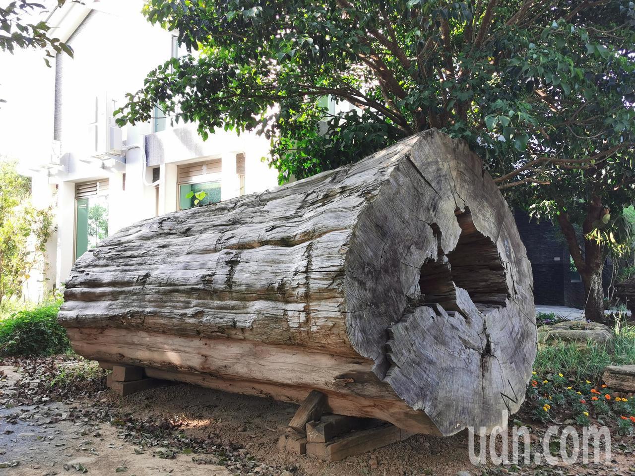 五柳園有許多蔡福源年輕蒐集的巨木。記者卜敏正/攝影