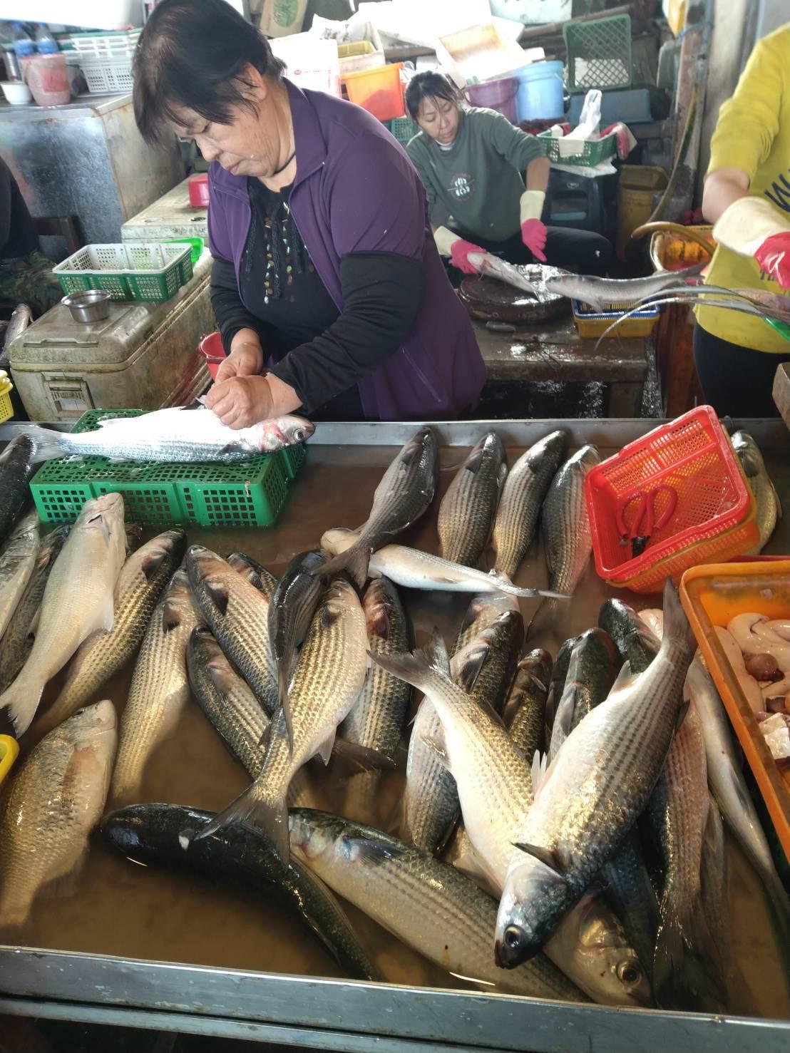 這兩天烏魚已出現在彰化沿海,線西漁民今天就捕了約4000尾烏魚,不只有烏魚卵,烏...