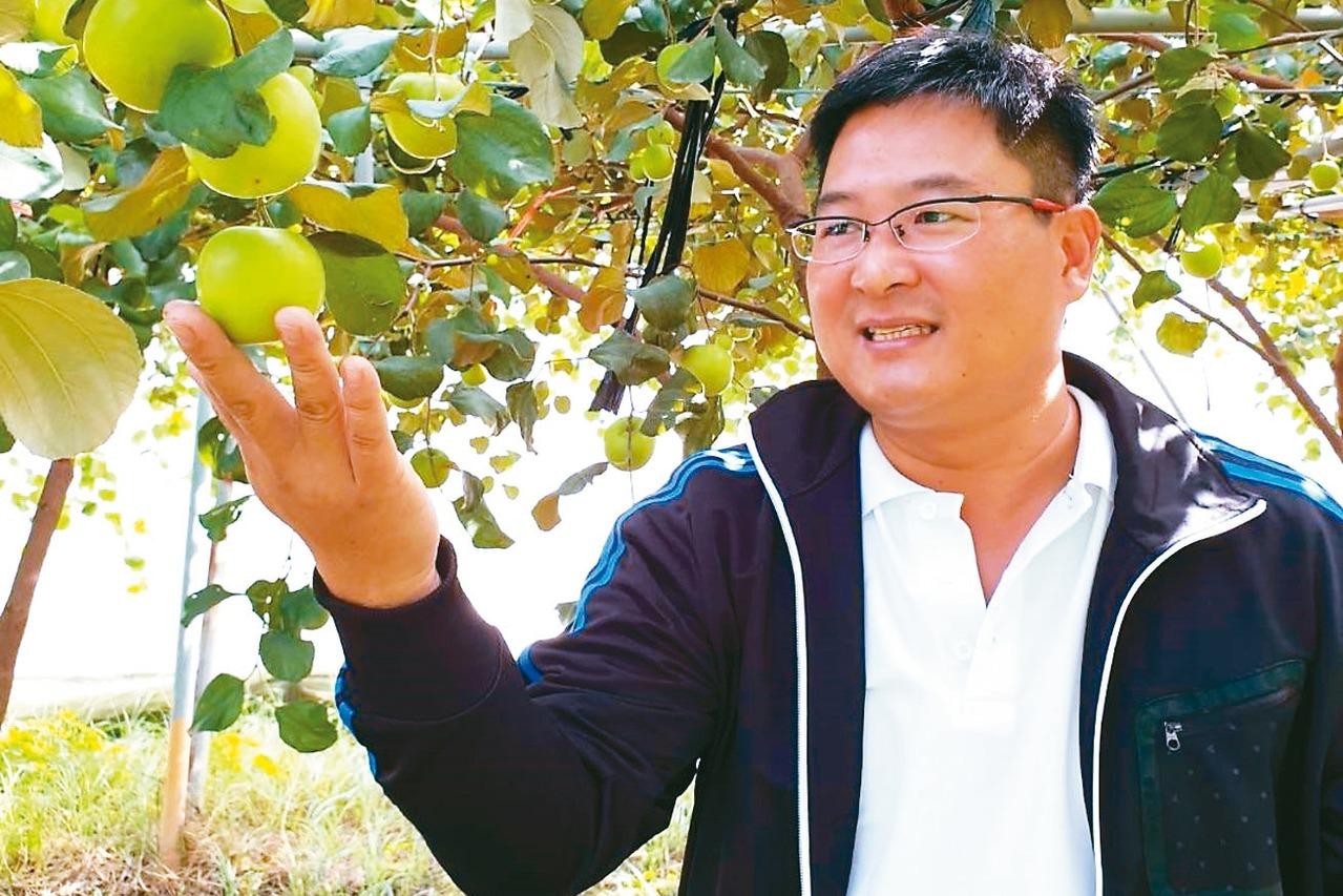 比青蘋果更美味 蜜棗新品種「雪麗」來了