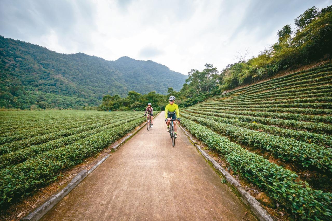 坪林品茶騎單車 盡覽北勢溪