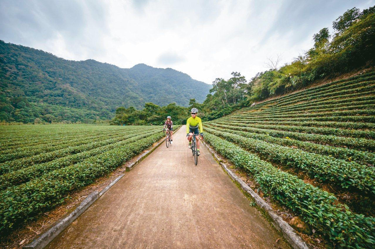 新北推出「稼日蒔光」遊程,鼓勵民眾健行或騎自行車,感受坪林生態美景及人文茶香。 ...