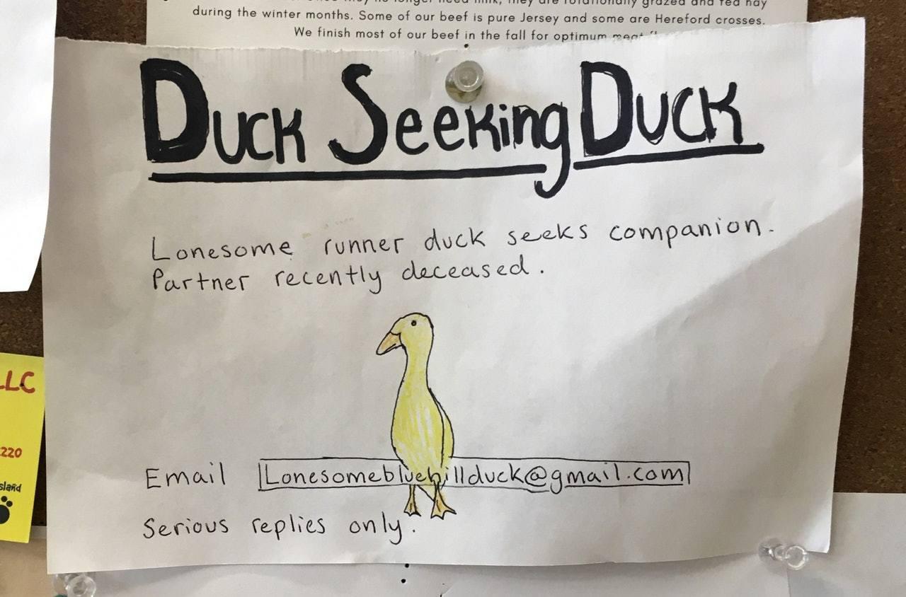 寵物鴨失去丈夫後鬱鬱寡歡,主人代畫徵友廣告,希望助牠尋到新的伴侶。 美聯社