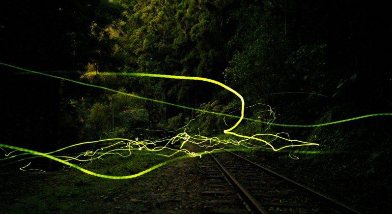 冬季螢火蟲日前現身嘉義奮起湖車站往土地公廟沿線,冬螢的閃爍光間隔時間短,以低速快門拍攝會呈現一條條綠色螢光。圖/攝影師陳昶達提供