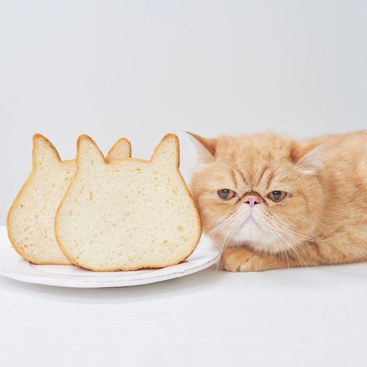 可愛的貓臉吐司,已是日本熱門的人氣商品。圖/取自nekoneko_shokupa...
