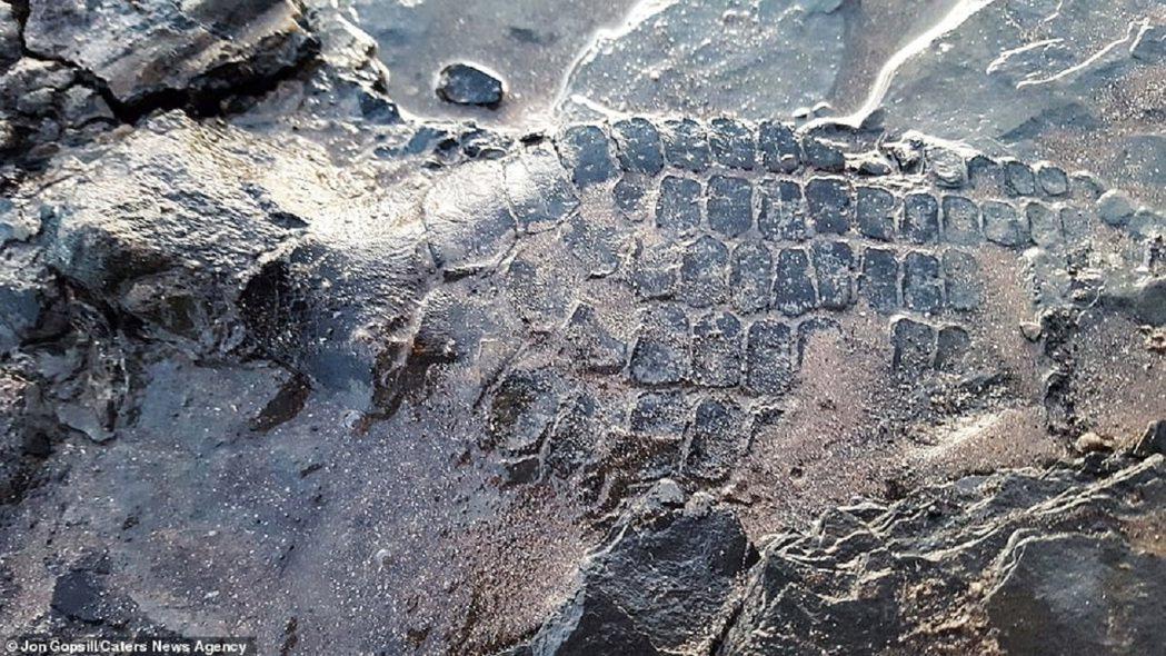 英國業餘考古家葛普西爾14日帶著小狗帕比跟山姆到岸邊散步,靠著牠們的敏銳嗅覺,發...