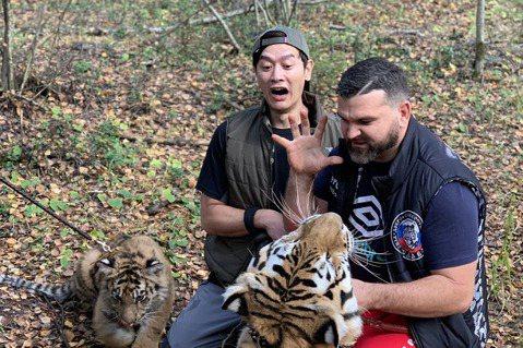 八大「世界第一等」主持人張勛傑日前飛往俄羅斯,探索老虎森林與大老虎近距離互動,但一看到站起來比人高的老虎出場,嚇得他閃超遠,驚呼:「好大隻喔,我會怕!不敢靠近牠。」聽到飼養員說:「與老虎互動前需要準...