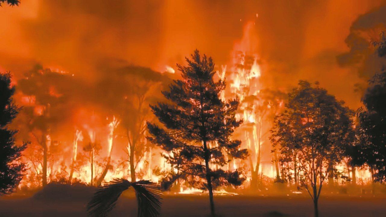 澳洲新南威爾斯省的林火持續延燒,連日高溫讓大火更難熄滅。 (路透)