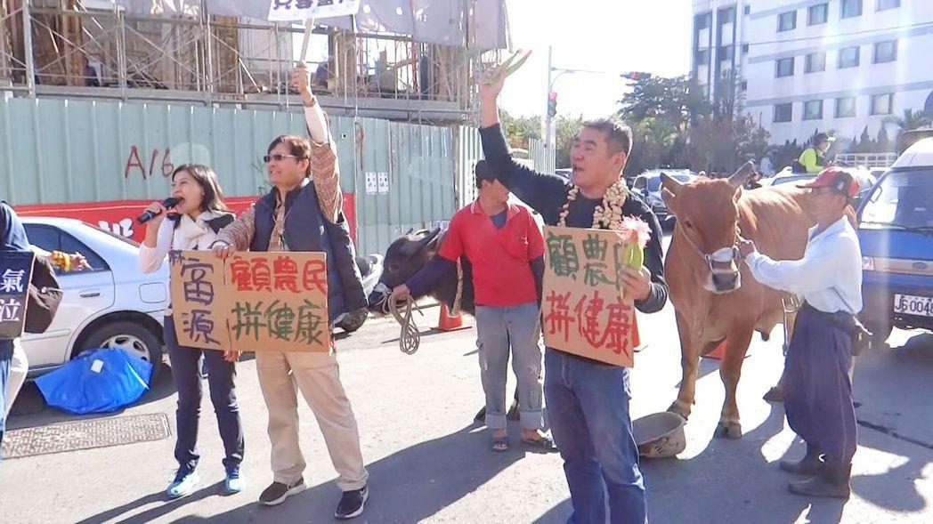 雲林立委候選人的林富源(中)帶兩頭牛參加抽簽,並為農民發聲。