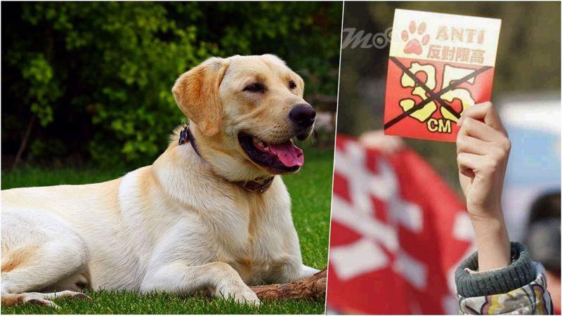 北京頒布限狗令,要求飼主自行撲殺愛犬。 (取材自微博)