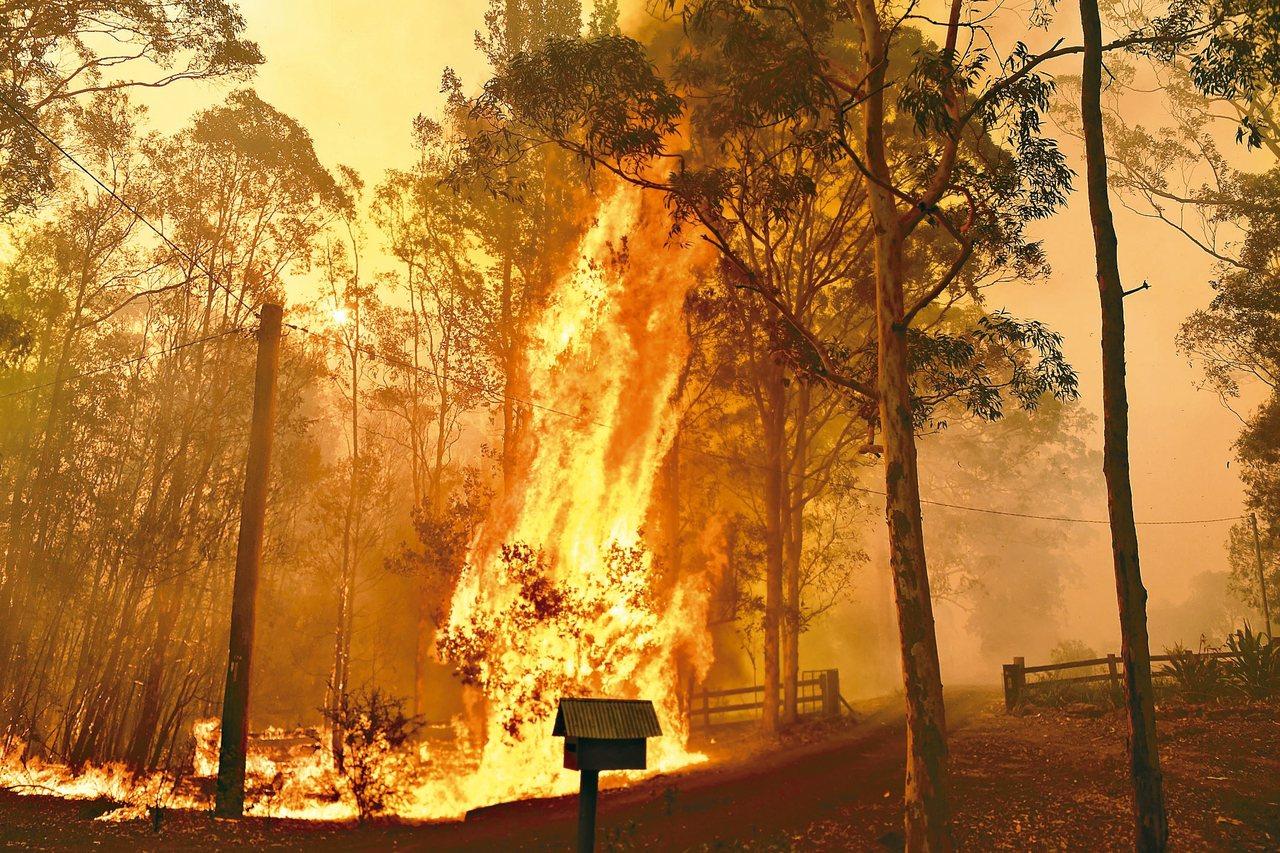 澳洲新南威爾斯省山林火災災情嚴重。 歐新社
