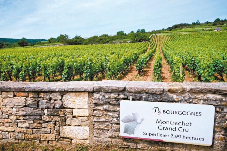 16家酒莊擁有8公頃的蒙哈榭特級園,此園被Puligny與Chassagne兩村...
