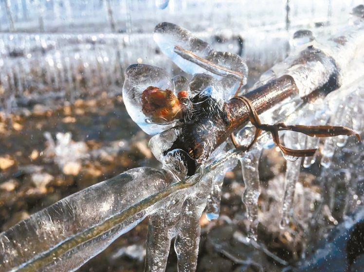 傳統預防春霜的方式可以在葡萄芽上噴水增加熱容量與導熱率,讓芽眼外表結上一層薄薄的...