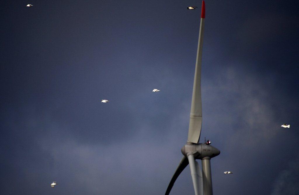 歐盟綠色政綱通訊文件中,隻字未提核能,反而是強調再生能源在邁向碳中和之路中是不可或缺的,增加離岸風力也是必要的。 圖/法新社
