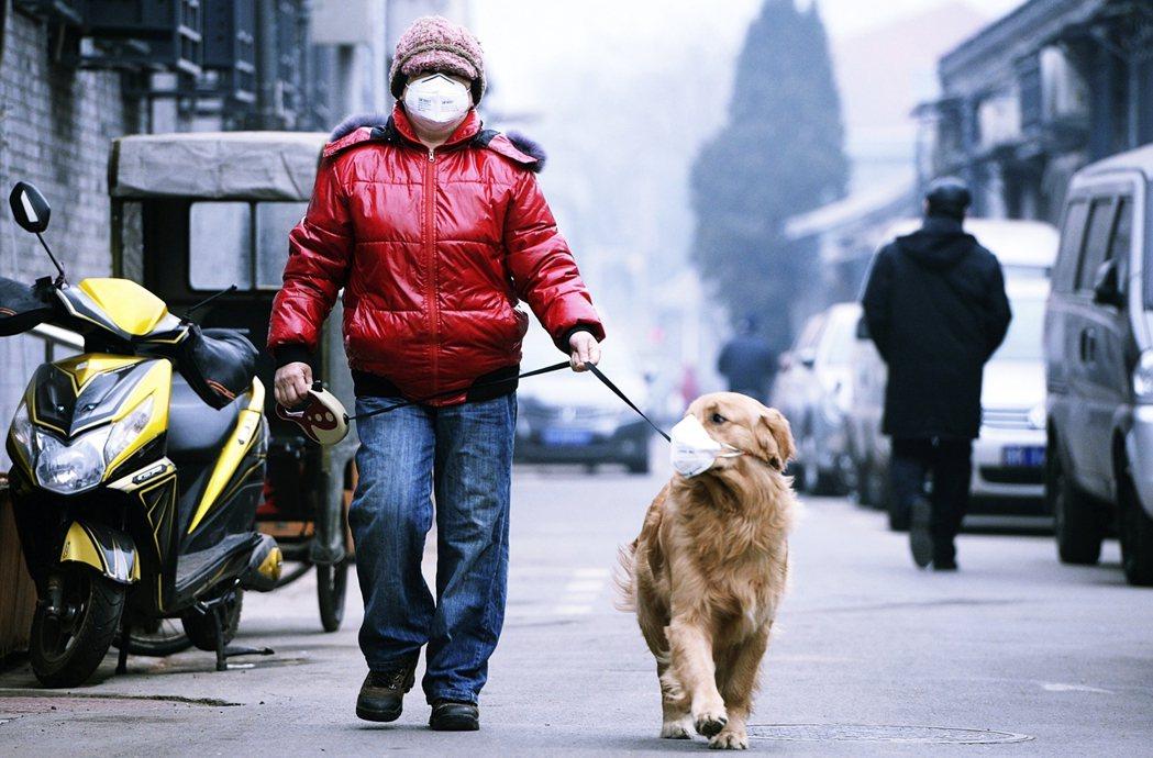 在街上遛大型犬的北京居民。其實最早1994年就有《北京市嚴格限制養犬規定》,當中...