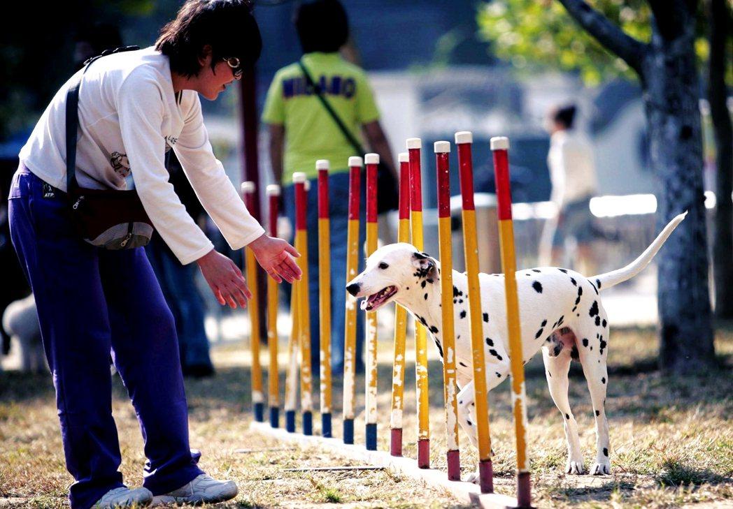 圖為在北京某處的公園。2003年《北京市養犬管理規定》,明載養狗必須繳納管理費(...