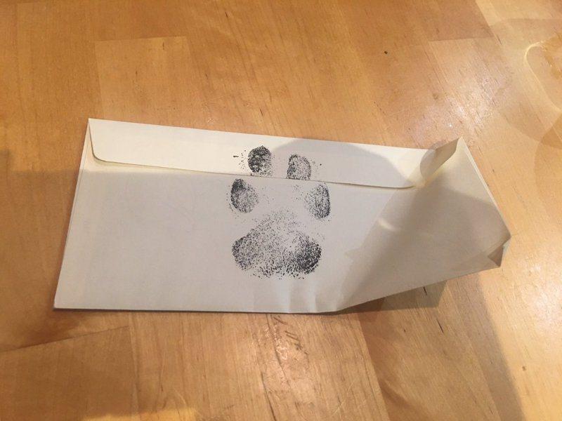 史蒂菲的回信上印著她的掌印。圖/Twitter