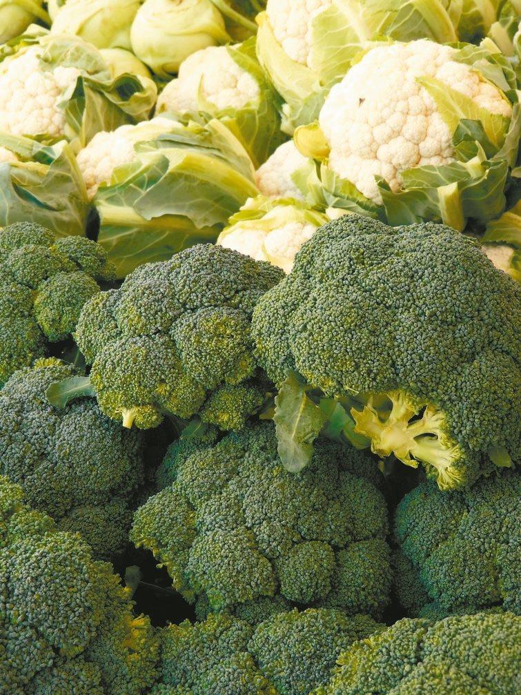十字花科蔬菜減緩衰老圖╱123RF