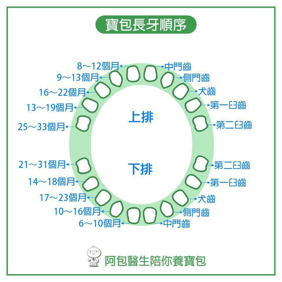 孩子的長牙順序,若順序差異很大,要考慮先天性遺傳疾病或缺牙,需進一步帶至牙科檢查...