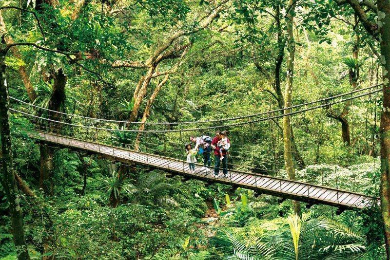 大板根每日的生態導覽受到旅客歡迎,圖為彩虹吊橋。 業者/提供