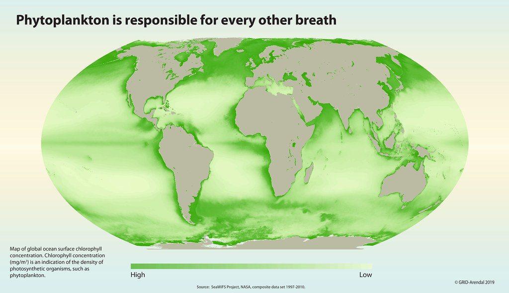 浮游生物關乎地球上所有生命的氧氣來源。圖為全球海域的葉綠素濃度分布, 圖/摘自聯...