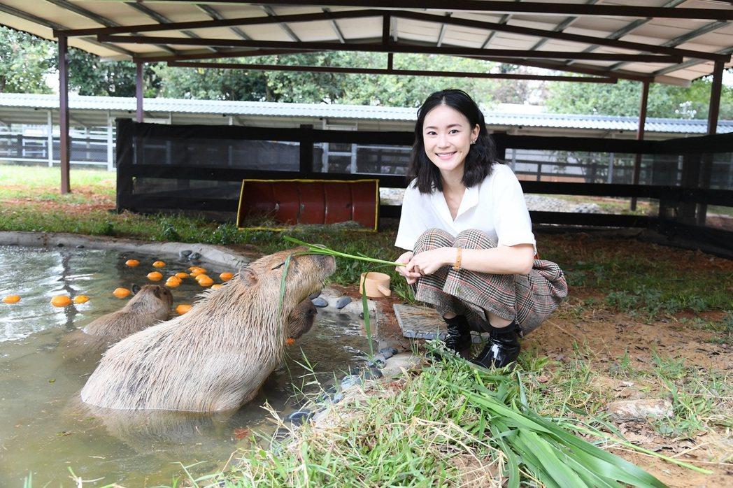 鍾瑶到埔心牧場與水豚近距離互動。圖/三立提供