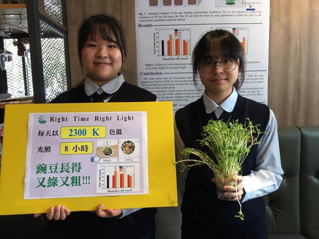 曙光女中學生張彣、任詠薇以豌豆苗作為研究,結果顯示,適當的照光環境,對豌豆苗的生...