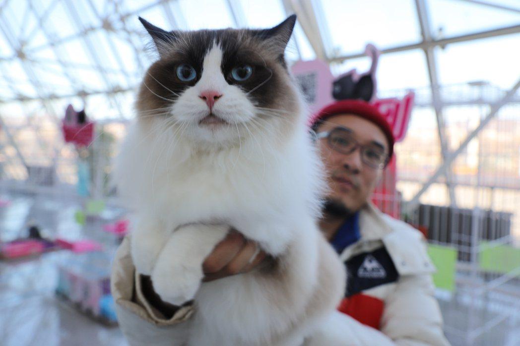 大陸不少民眾喜歡飼養貓當寵物。圖為上個月在黑龍江省舉行的中俄青少年交流周系列活動...