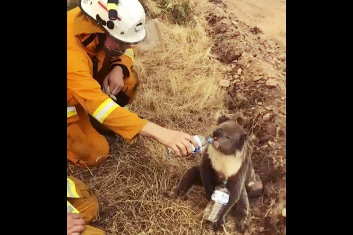 澳洲9月以來的極端大火持續延燒,目前已有300萬公頃的土地被焚毀、至少9死。 圖...
