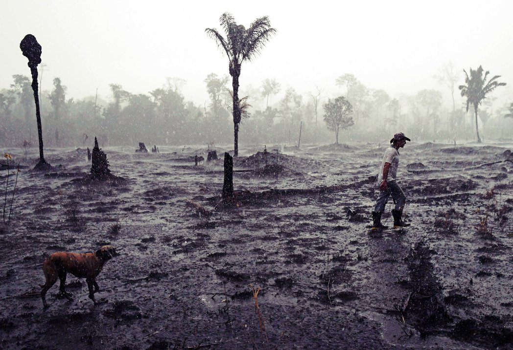 國際重視巴西毀林的聲量是在地環保組織所樂見的。希望各方不只是把議題建築在情緒上的...