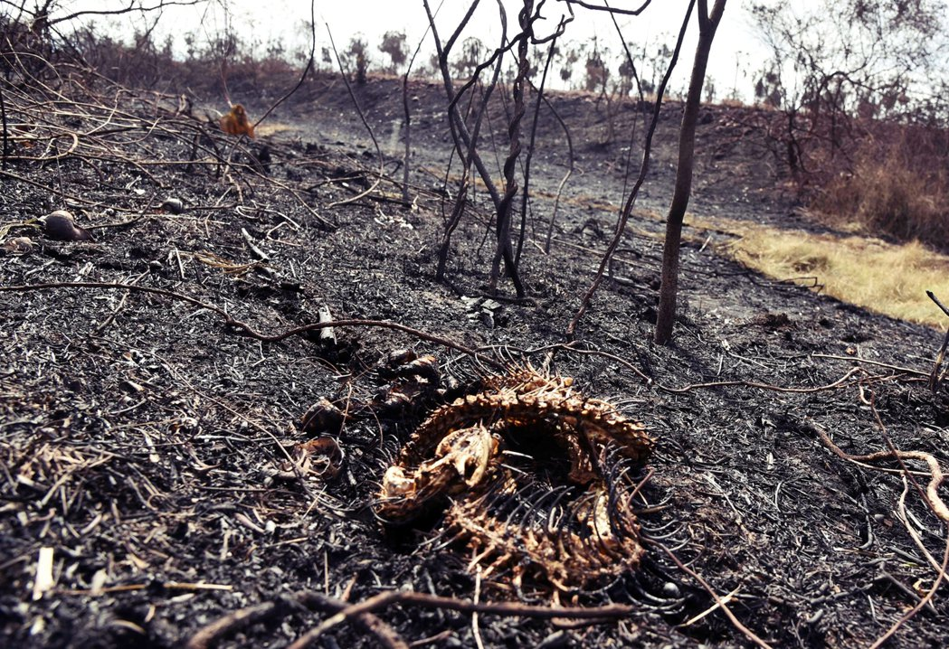 亞馬遜大火不只波及巴西,玻利維亞的狀況也同樣受到國際矚目,不過能見度相對來說較巴...