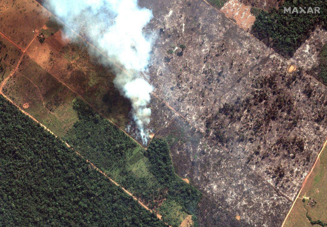 起火數、焚燒面積和毀林面積其實是三種有關連但不同的資料。「毀林」是一個動態的過程...